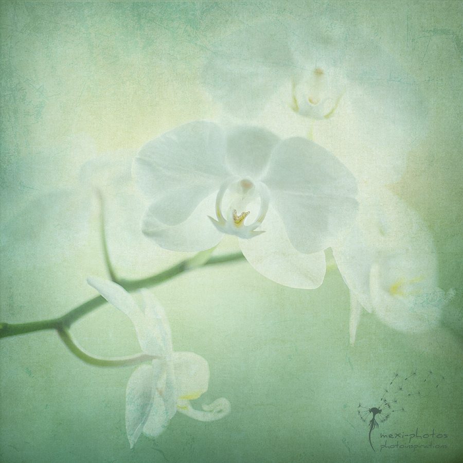 Orchid FineArt