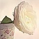 one white rose ...